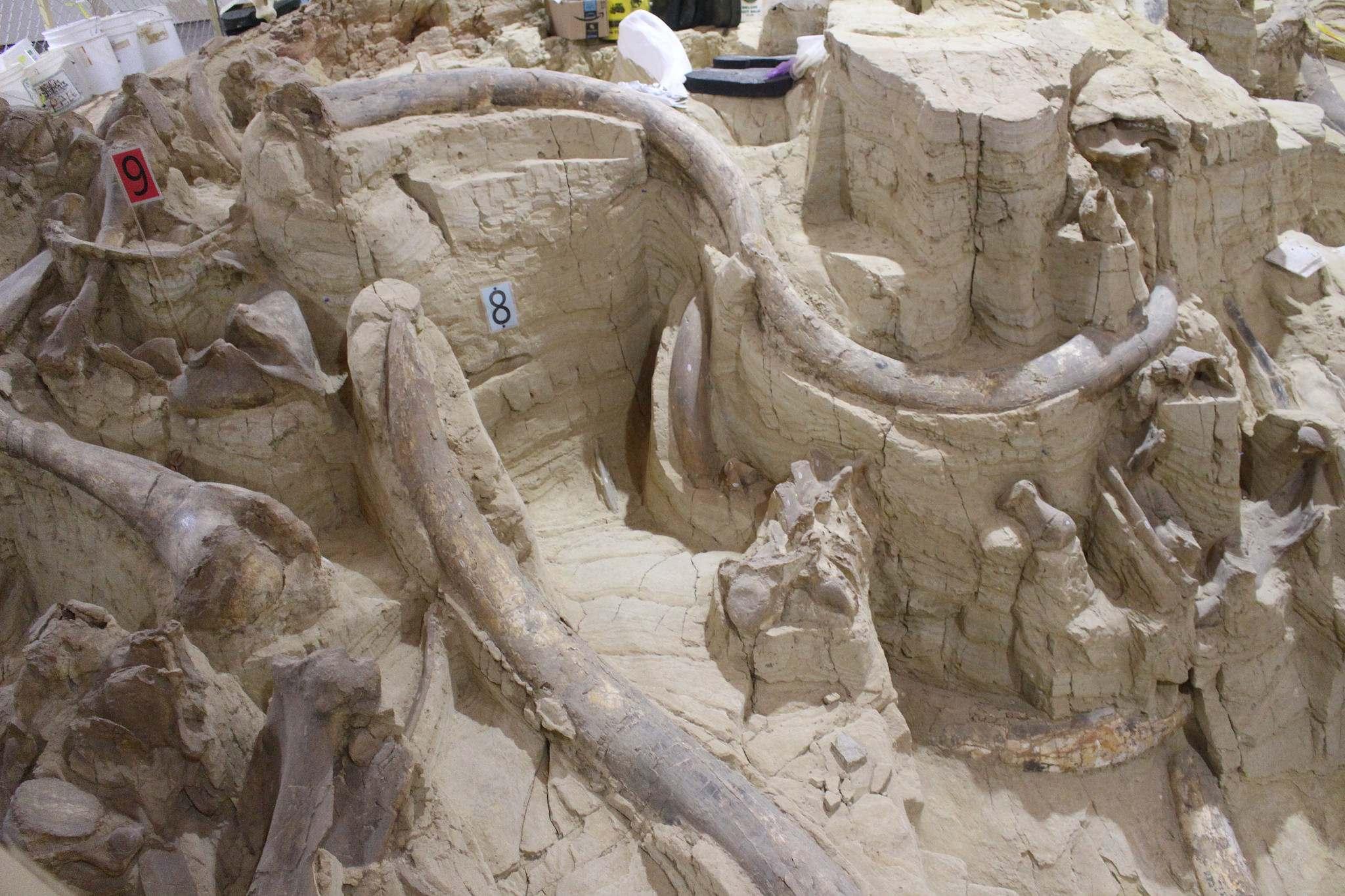 mammoth site10 Mammoth Site of Hot Springs in South Dakota