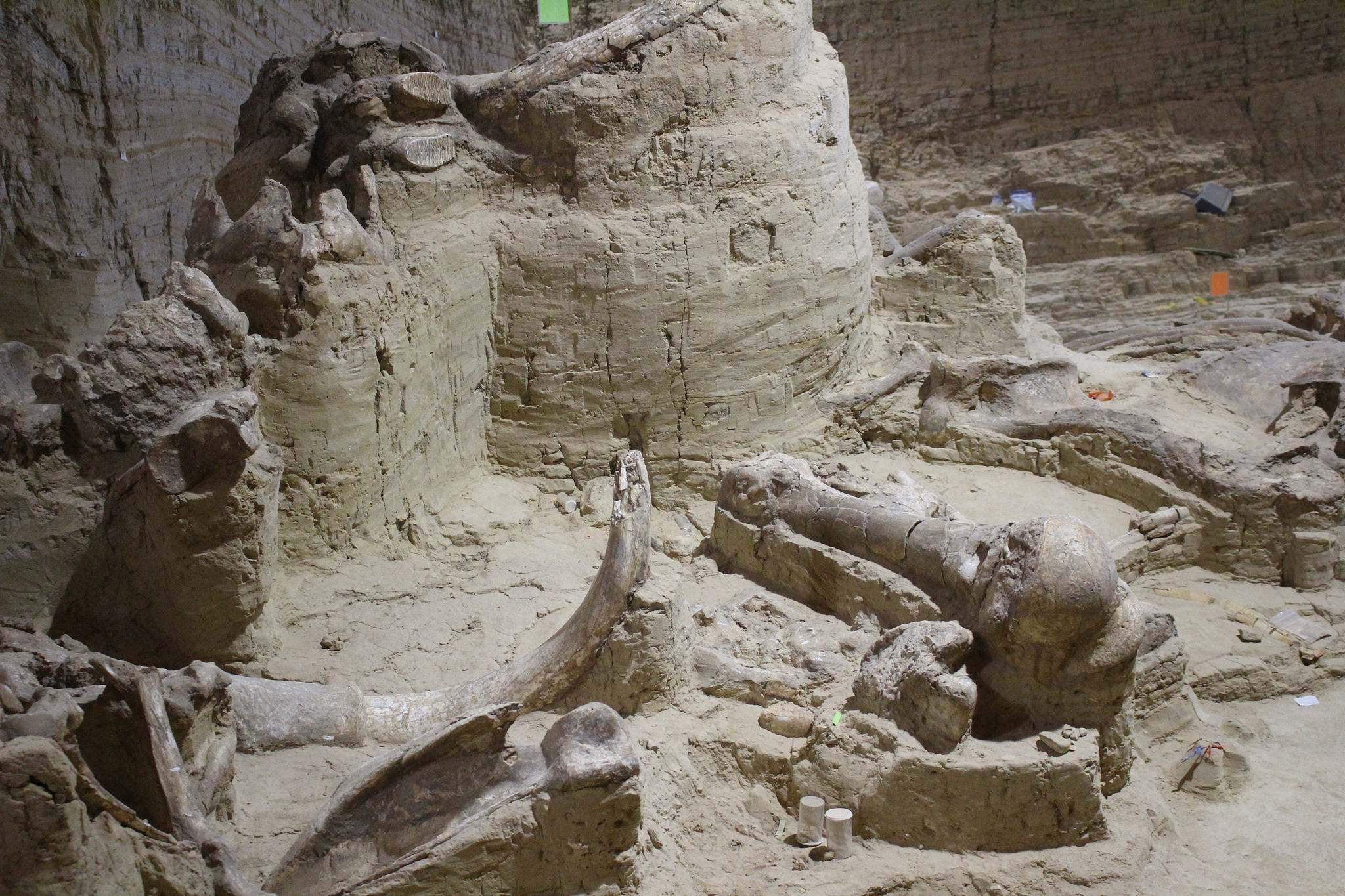 mammoth site2 Mammoth Site of Hot Springs in South Dakota