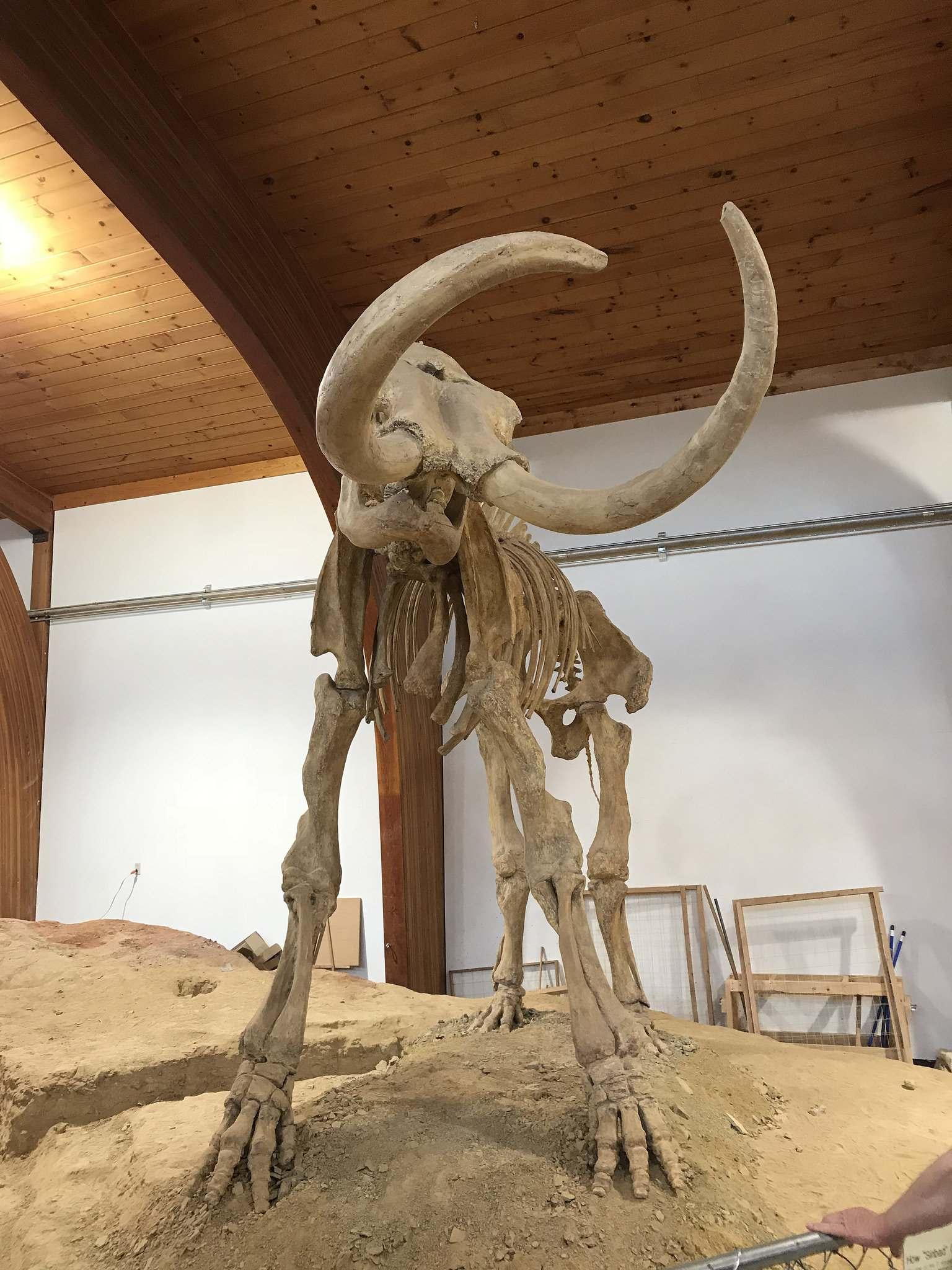 mammoth site9 Mammoth Site of Hot Springs in South Dakota