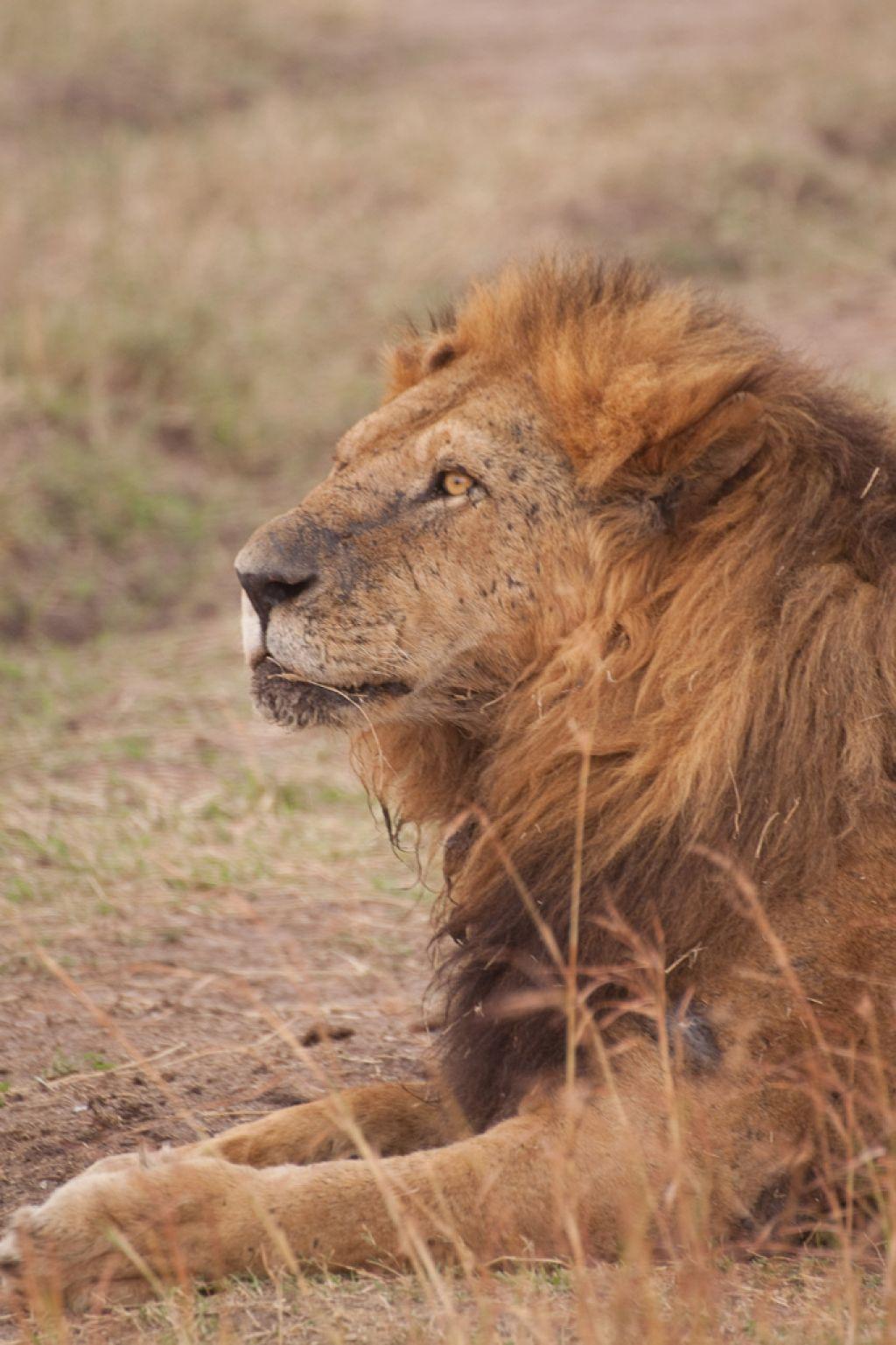 kenya safari11 Masai Mara Camping Safari in Kenya