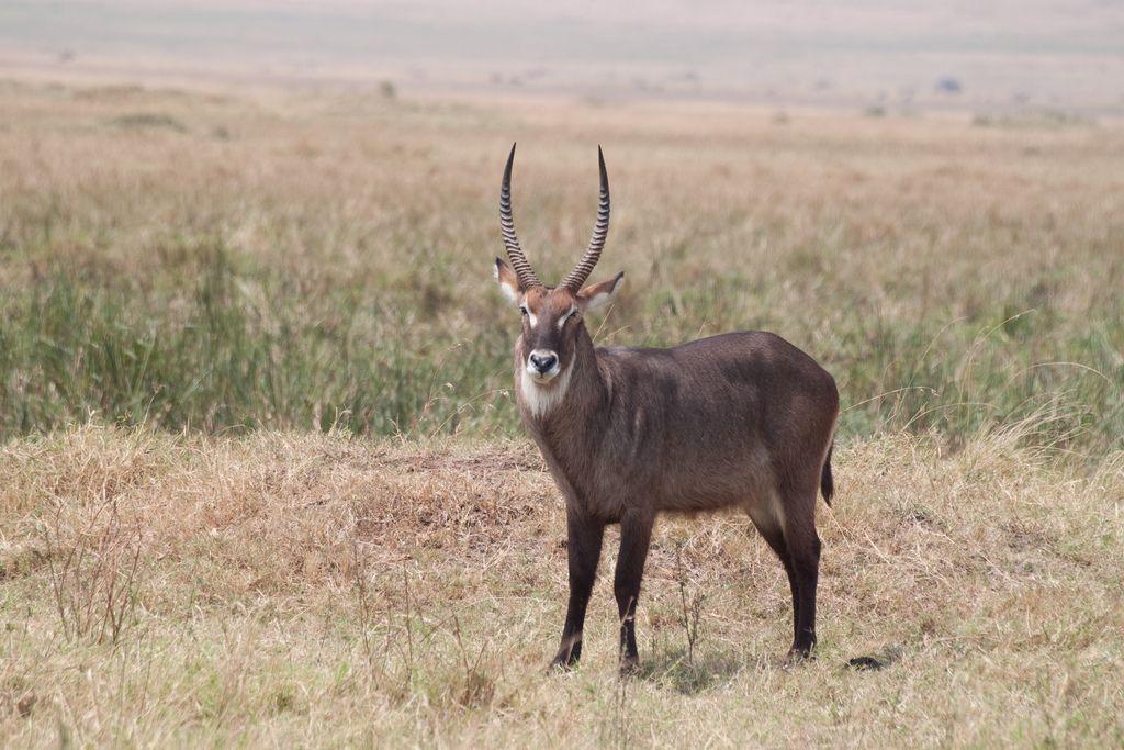 kenya safari14 Masai Mara Camping Safari in Kenya