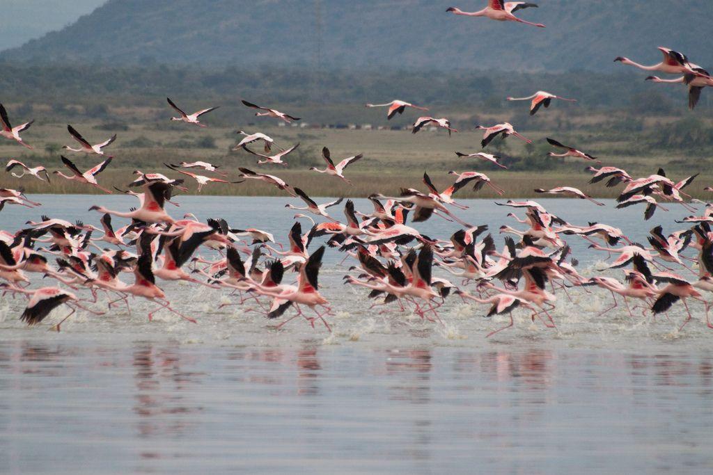 kenya safari17 Masai Mara Camping Safari in Kenya