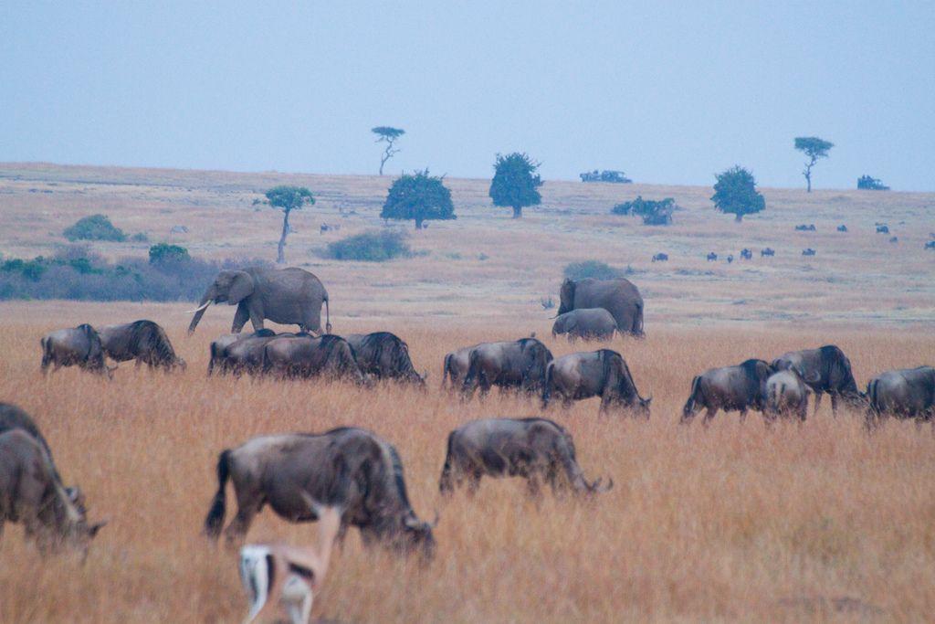 kenya safari22 Masai Mara Camping Safari in Kenya