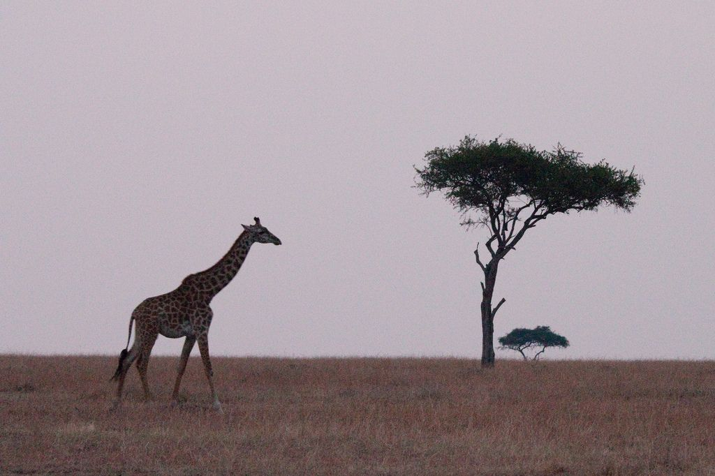 kenya safari23 Masai Mara Camping Safari in Kenya
