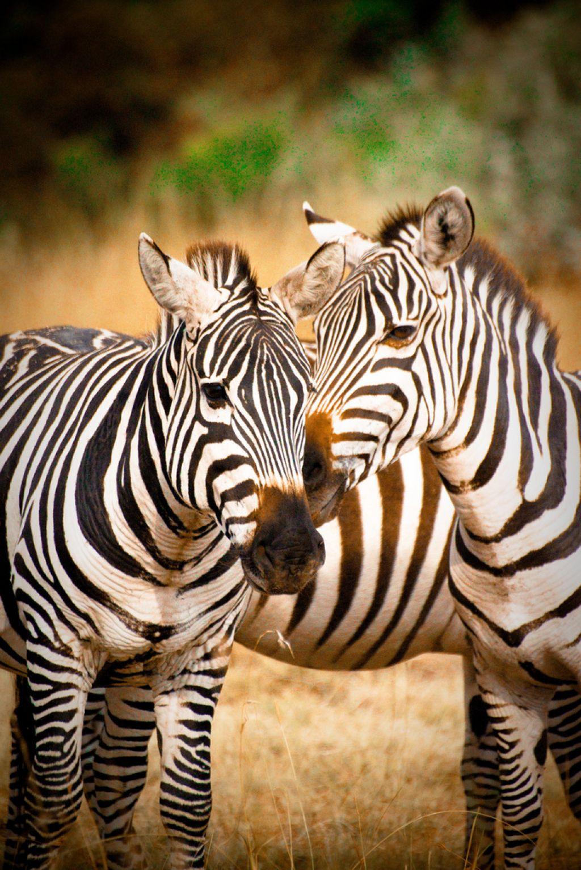 kenya safari26 Masai Mara Camping Safari in Kenya