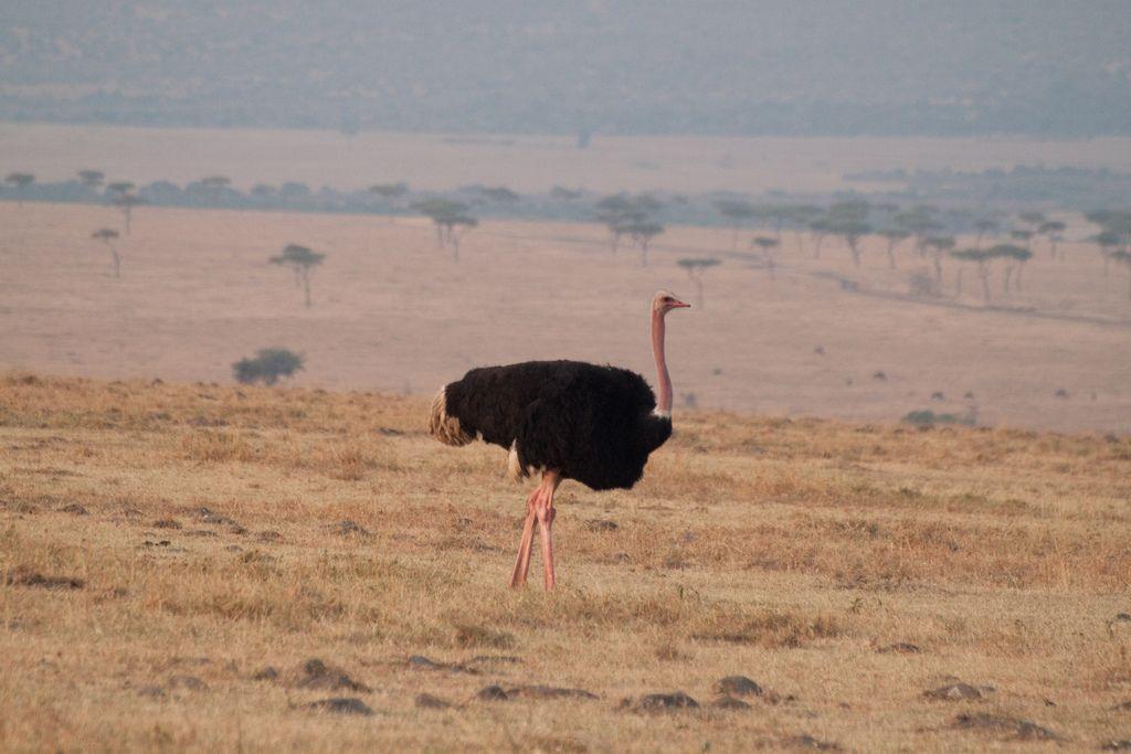 kenya safari4 Masai Mara Camping Safari in Kenya