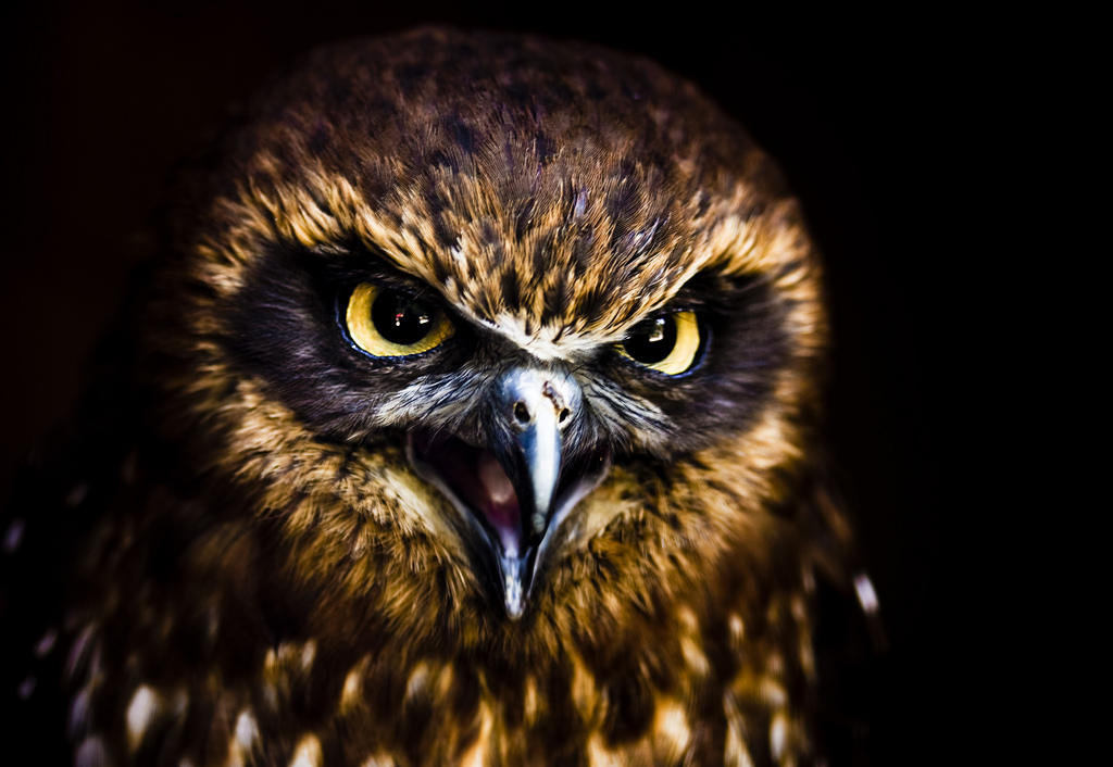 owl6 Most Interesting Eyes Of A Night Owl