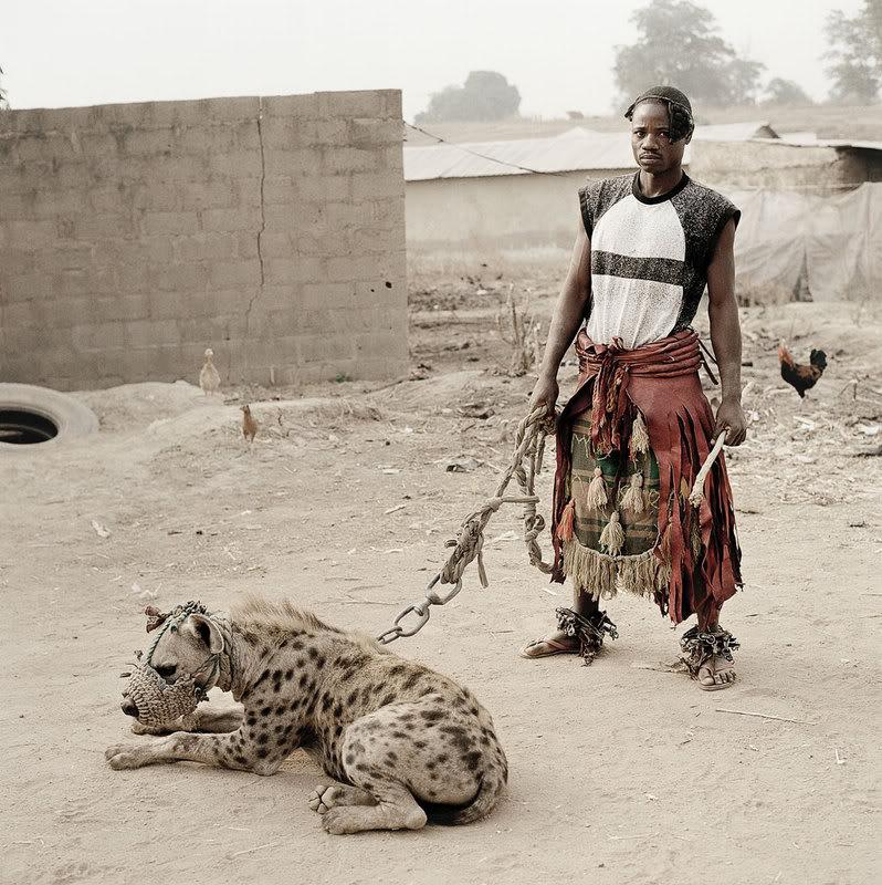 hyena The Nigerian Hyena Men   Do You Want a Good GuardDog ?