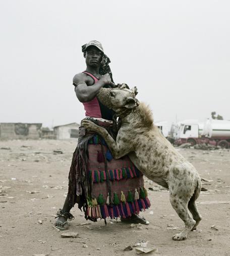 hyena1 The Nigerian Hyena Men   Do You Want a Good GuardDog ?