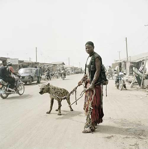 hyena2 The Nigerian Hyena Men   Do You Want a Good GuardDog ?