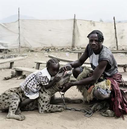 hyena3 The Nigerian Hyena Men   Do You Want a Good GuardDog ?