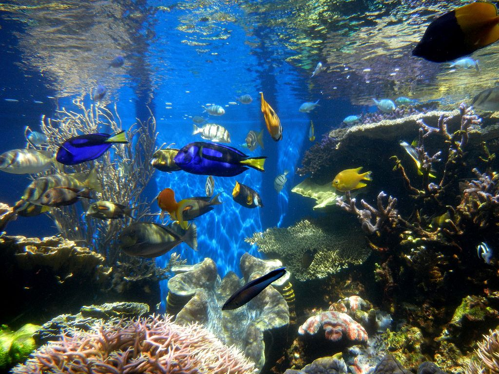 waikiki aquarium Welcome to Waikiki Aquarium