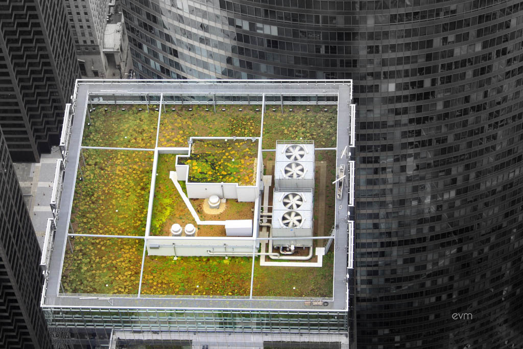 green roof2 Innovative Green Roofs for Healthy Cities