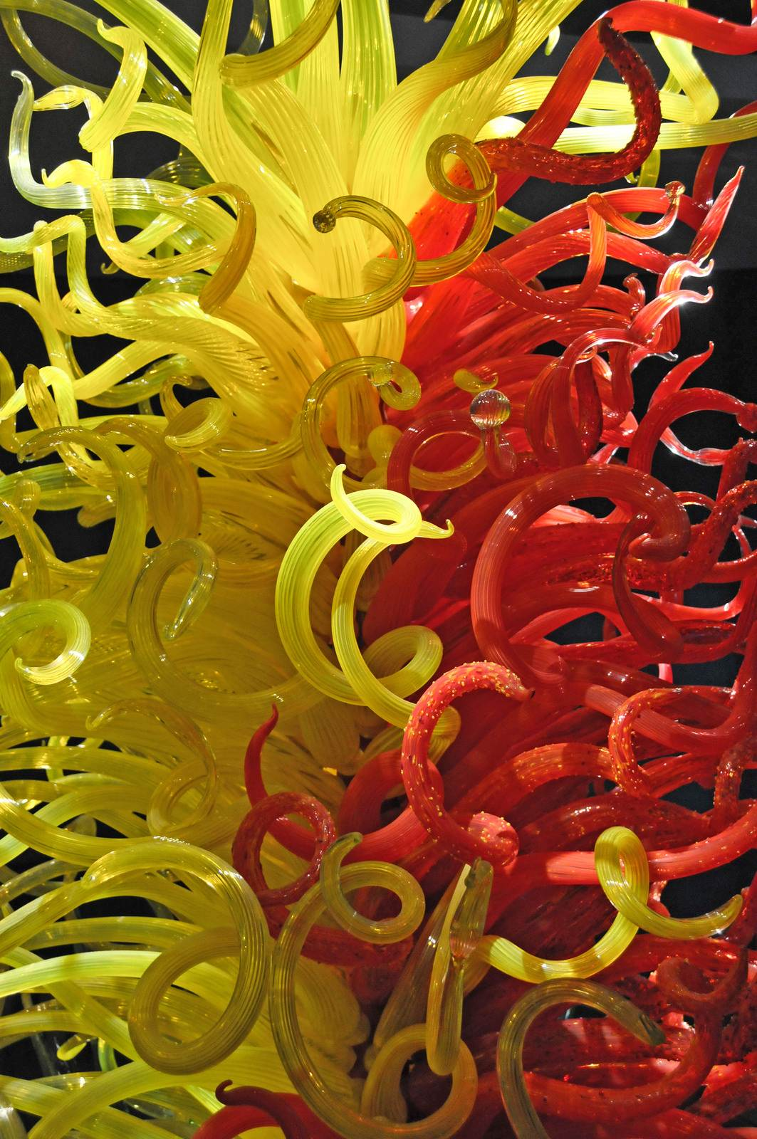 chihuly4 Chihuly Collection in St. Petersburg
