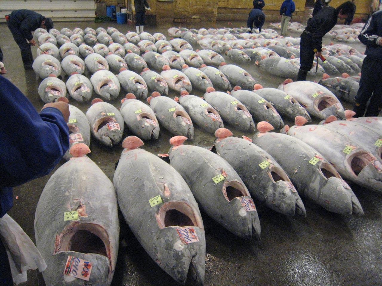 tsukiji market1 Biggest Wholesale Fish and Seafood Market
