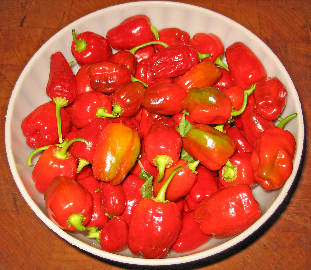 magical chili peppers aka 7 Magical Chili Peppers aka Hot Habanero