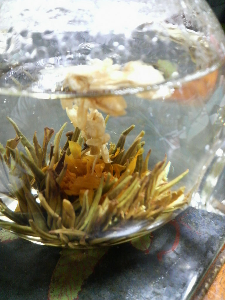 tea flower5 Quite Unusual Blooming Flower Tea