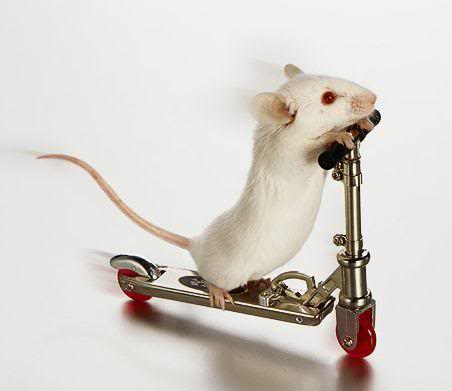 funny mouse Funny Mouse Pictures