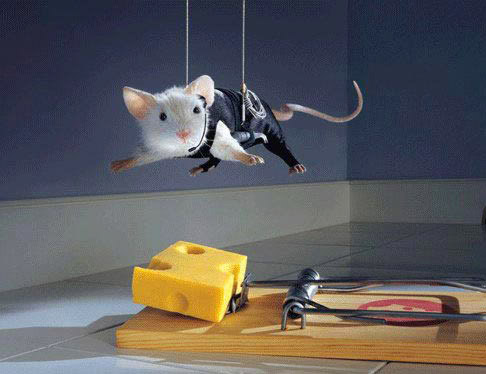 funny mouse2 Funny Mouse Pictures