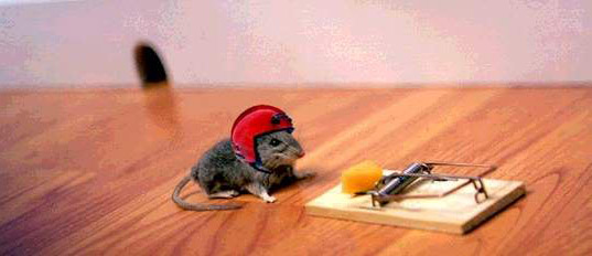 funny mouse6 Funny Mouse Pictures