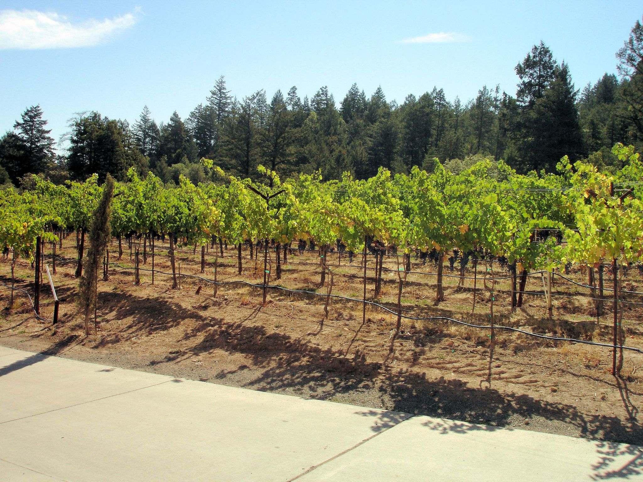 castello di amorosa13 Castello di Amorosa Winery in Napa Valley, California