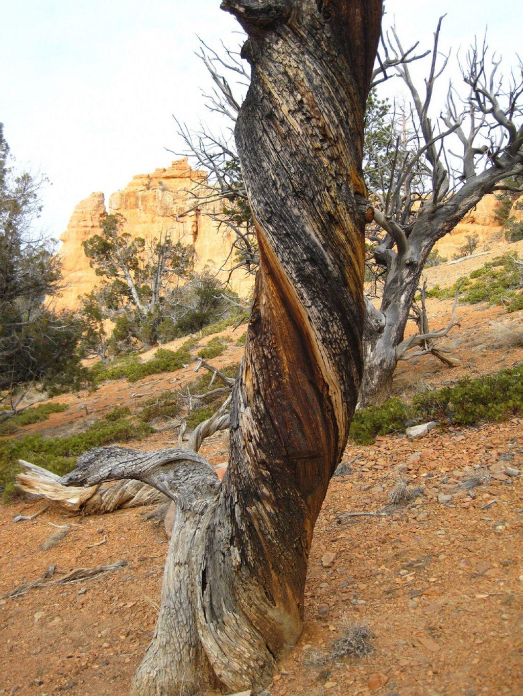 canyon trail5 Losee Canyon Trail