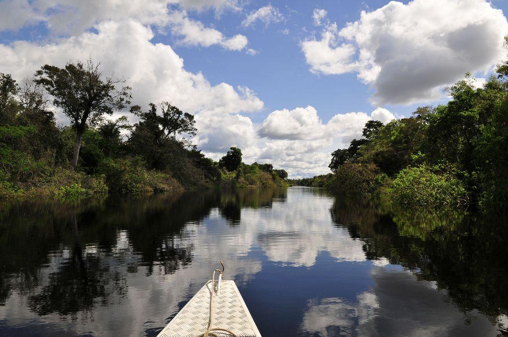 amazon rainforest10 Top Facts about Amazon Rainforest