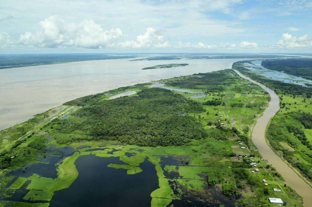 amazon rainforest2 Top Facts about Amazon Rainforest