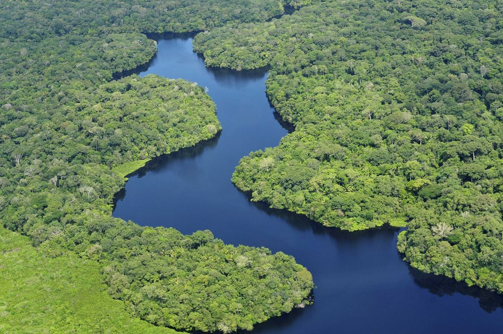 amazon rainforest4 Top Facts about Amazon Rainforest