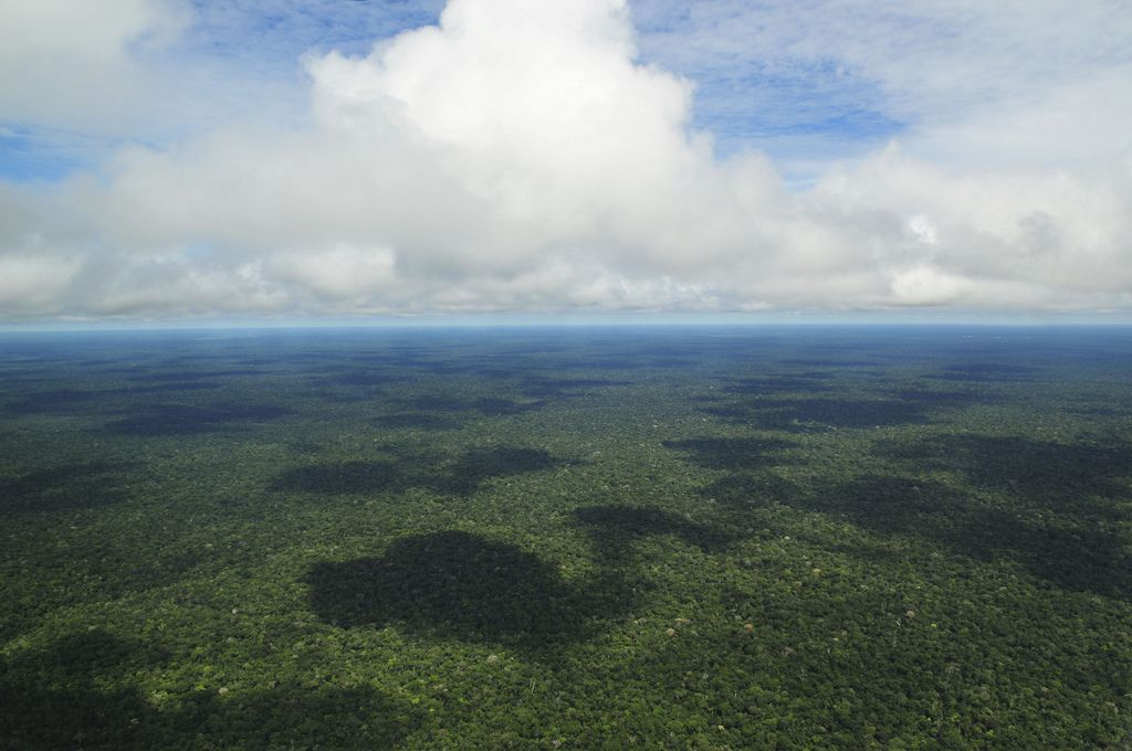 amazon rainforest6 Top Facts about Amazon Rainforest