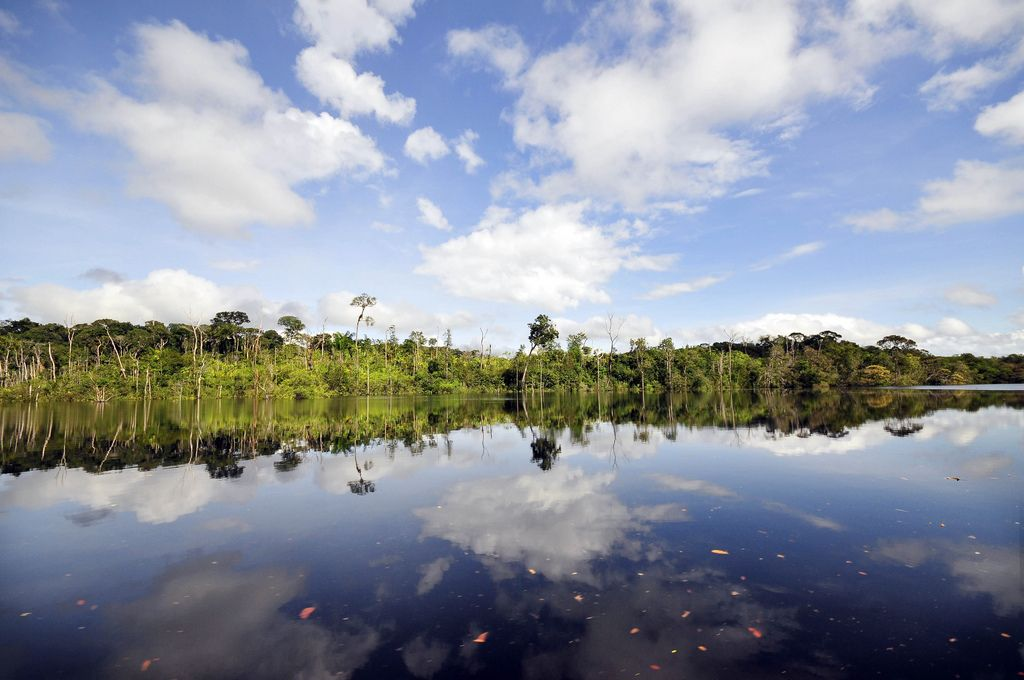 amazon rainforest9 Top Facts about Amazon Rainforest
