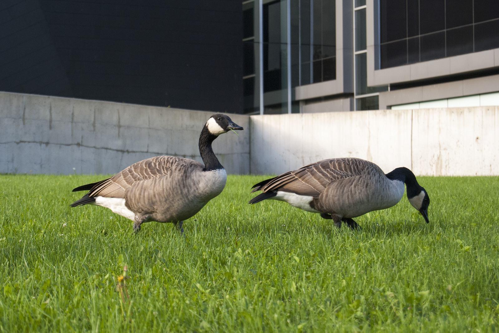 university toronto7 University of Toronto Mississauga