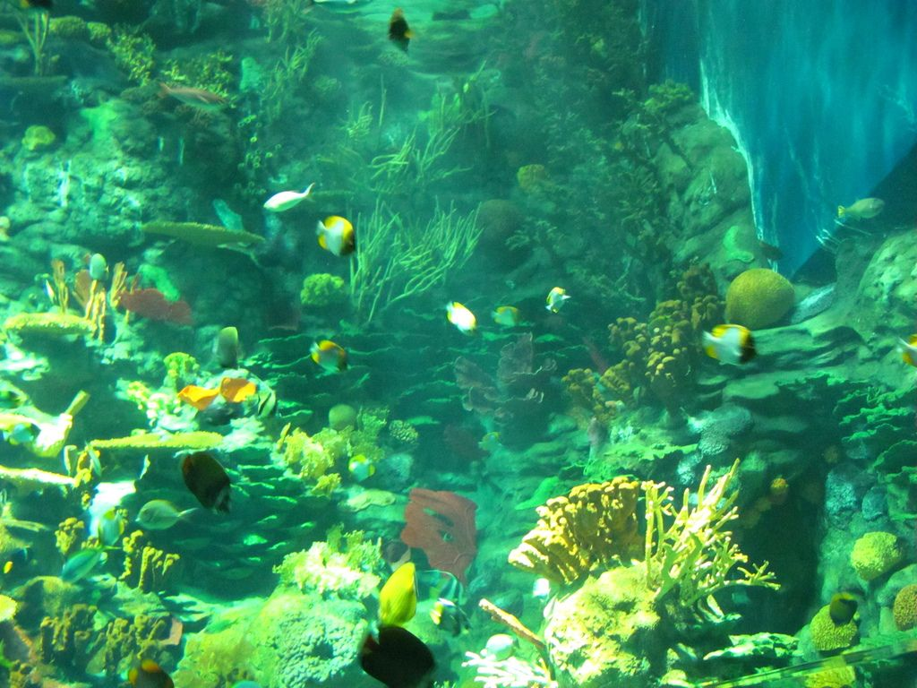 ocean park hong kong14 World Class Ocean Park in Hong Kong