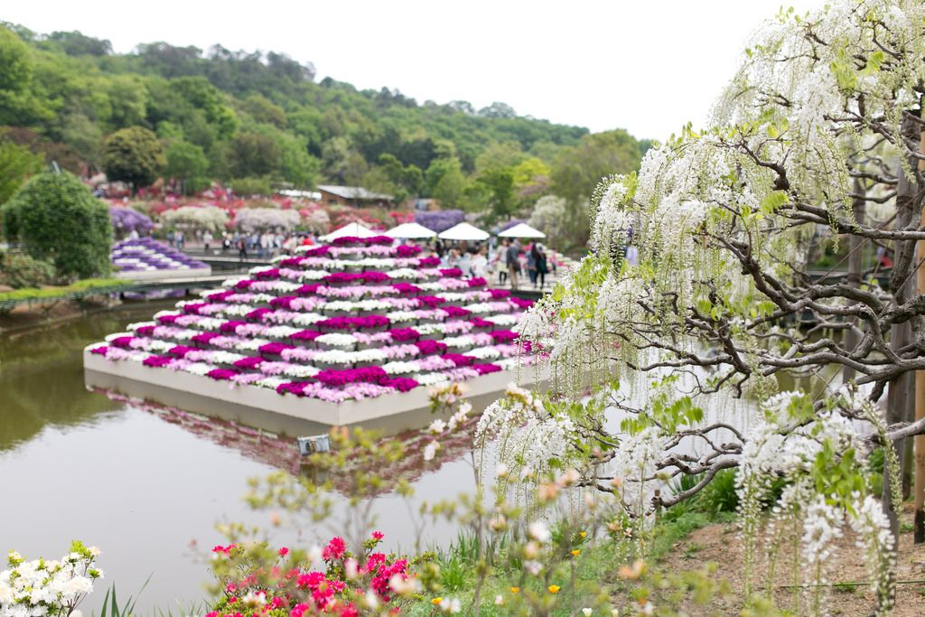 ashikaga flower park13 Amazing Ashikaga Flower Park, Japan