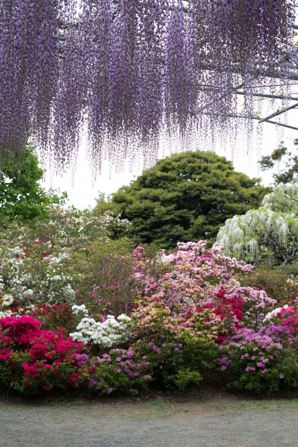 ashikaga flower park5 Amazing Ashikaga Flower Park, Japan
