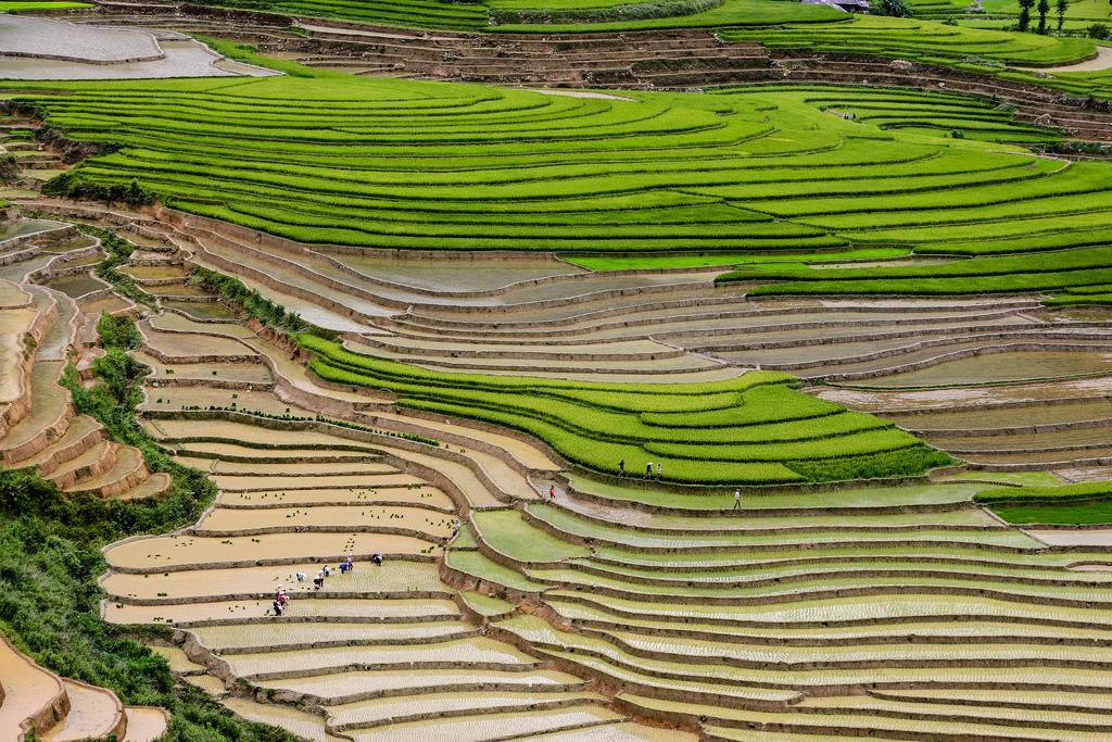mu cang chai3 Amazing Place   Rice Terrace Fields in Mu Cang Chai, Vietnam