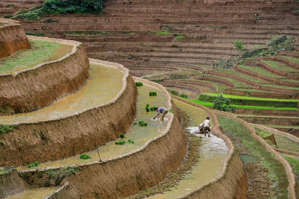 mu cang chai5 Amazing Place   Rice Terrace Fields in Mu Cang Chai, Vietnam