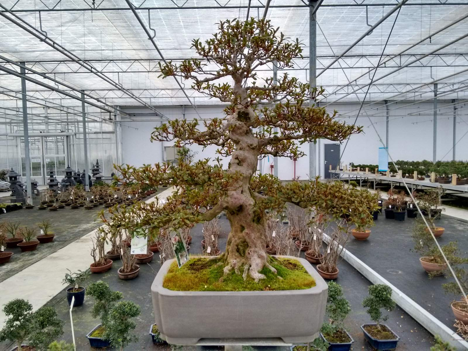 bonsai lodder3 Bonsai Lodder   One of the Largest Bonsai Store in the World, Netherlands