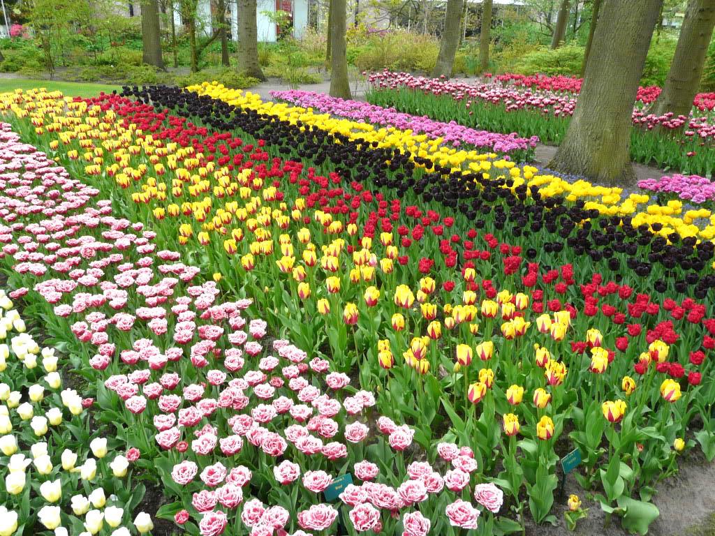 keukenhof19 Colorful Keukenhof Gardens in Netherlands