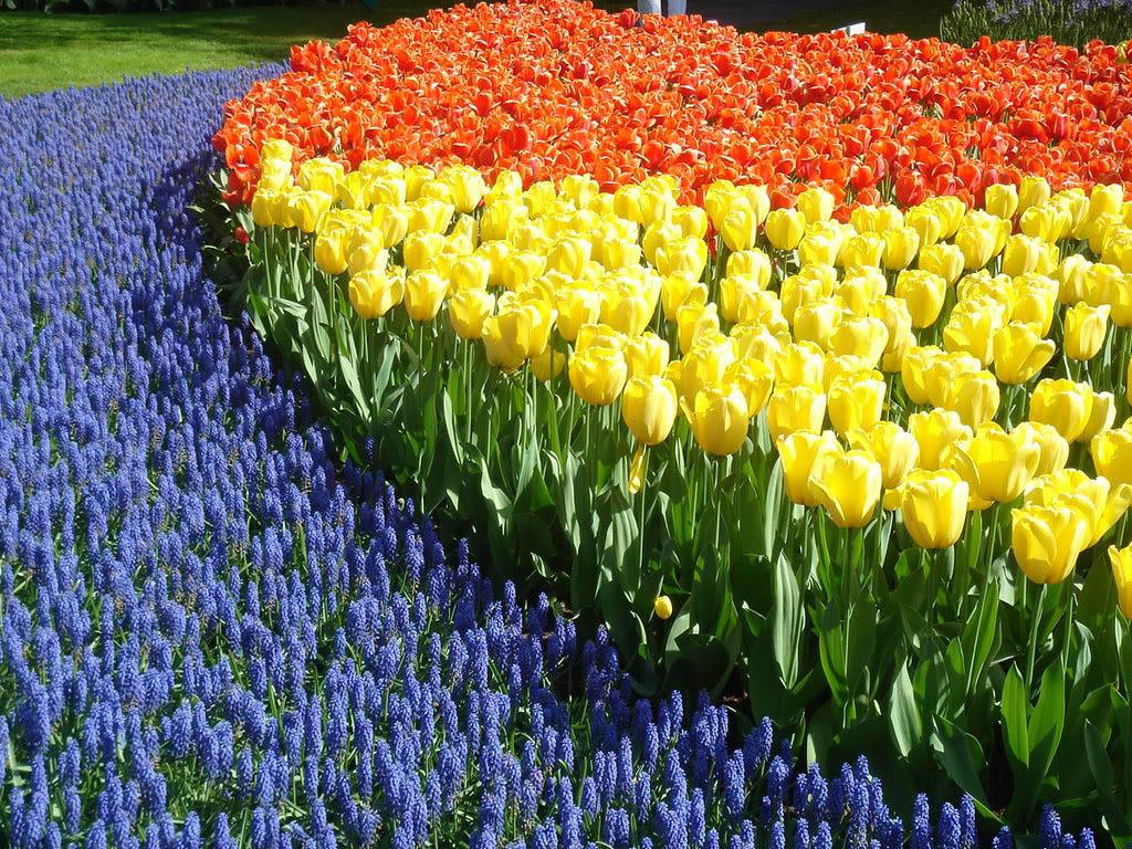 keukenhof2 Colorful Keukenhof Gardens in Netherlands