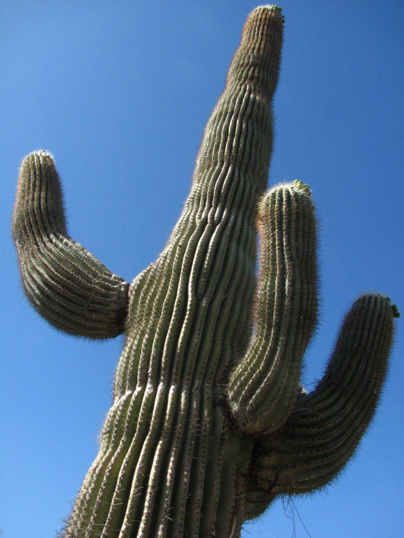 desert botanical garden2 Desert Botanical Garden at Papago Park, Phoenix