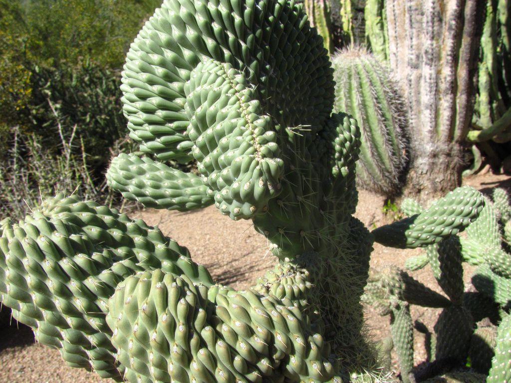 desert botanical garden7 Desert Botanical Garden at Papago Park, Phoenix