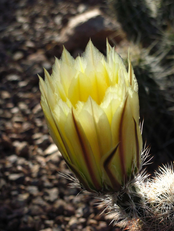 desert botanical garden8 Desert Botanical Garden at Papago Park, Phoenix