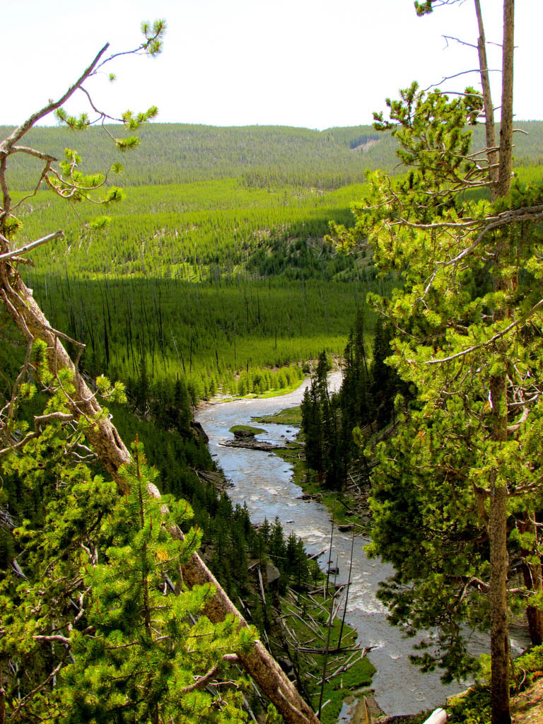 yellowstone national park11 Great Pictures of Yellowstone National Park