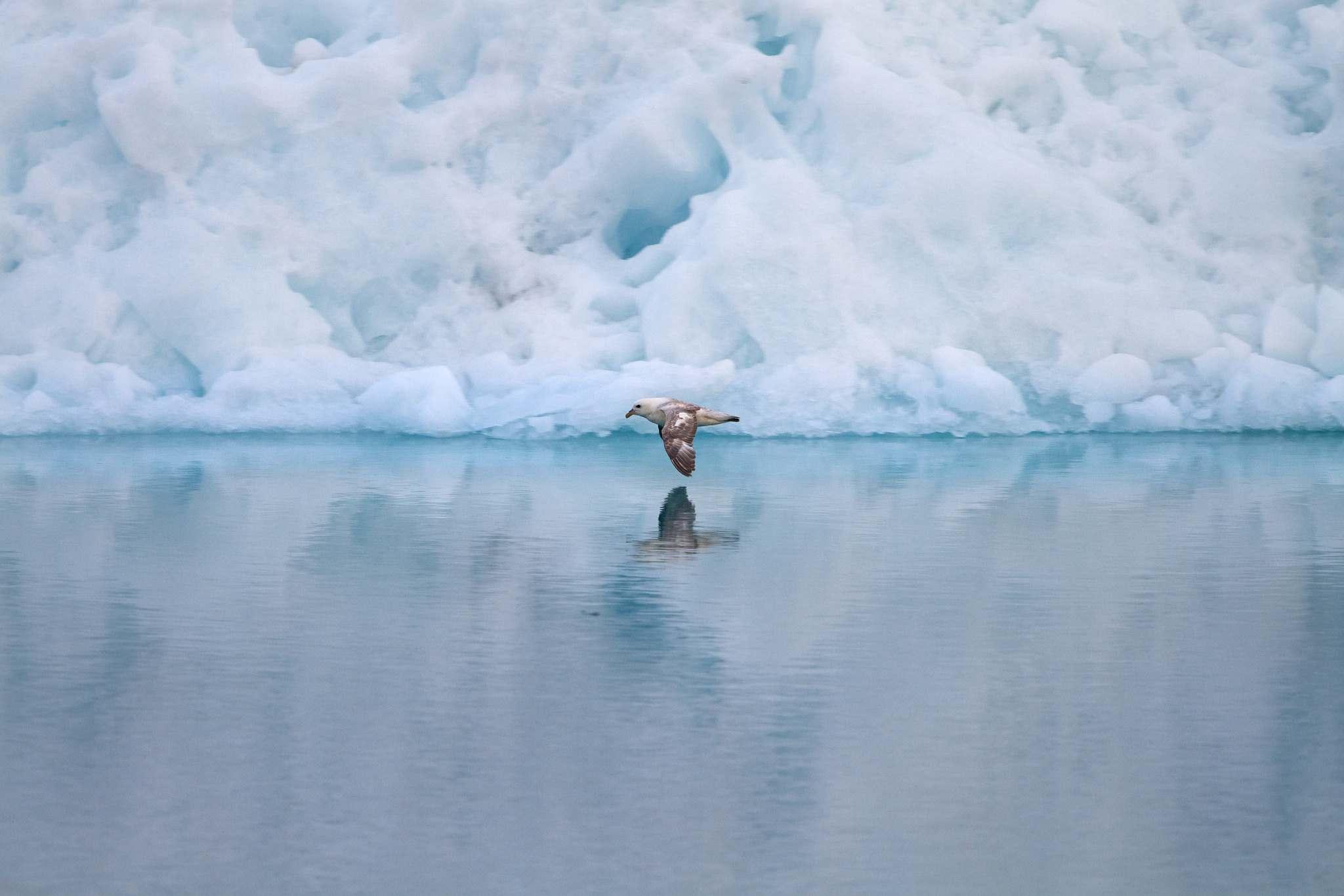 icefjord ilulissat8 The icefjord in Ilulissat, Greenland