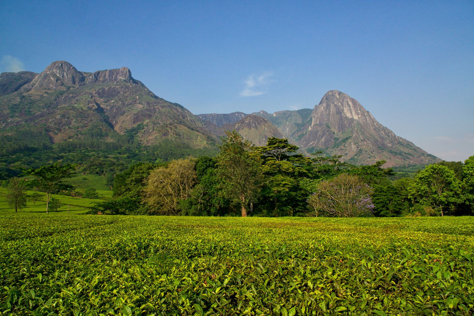 mulanje mountain1 Magnificent Mulanje Mountain and Tea Estates