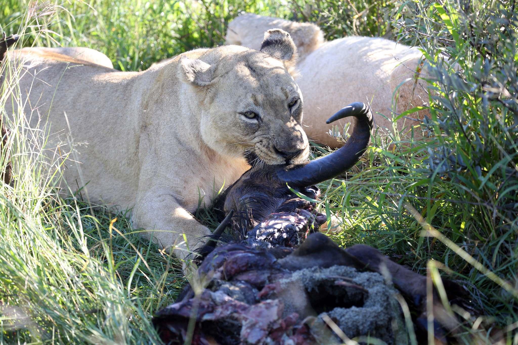 mosetlha bush camp3 Mosetlha Bush Camp at Madikwe Game Reserve