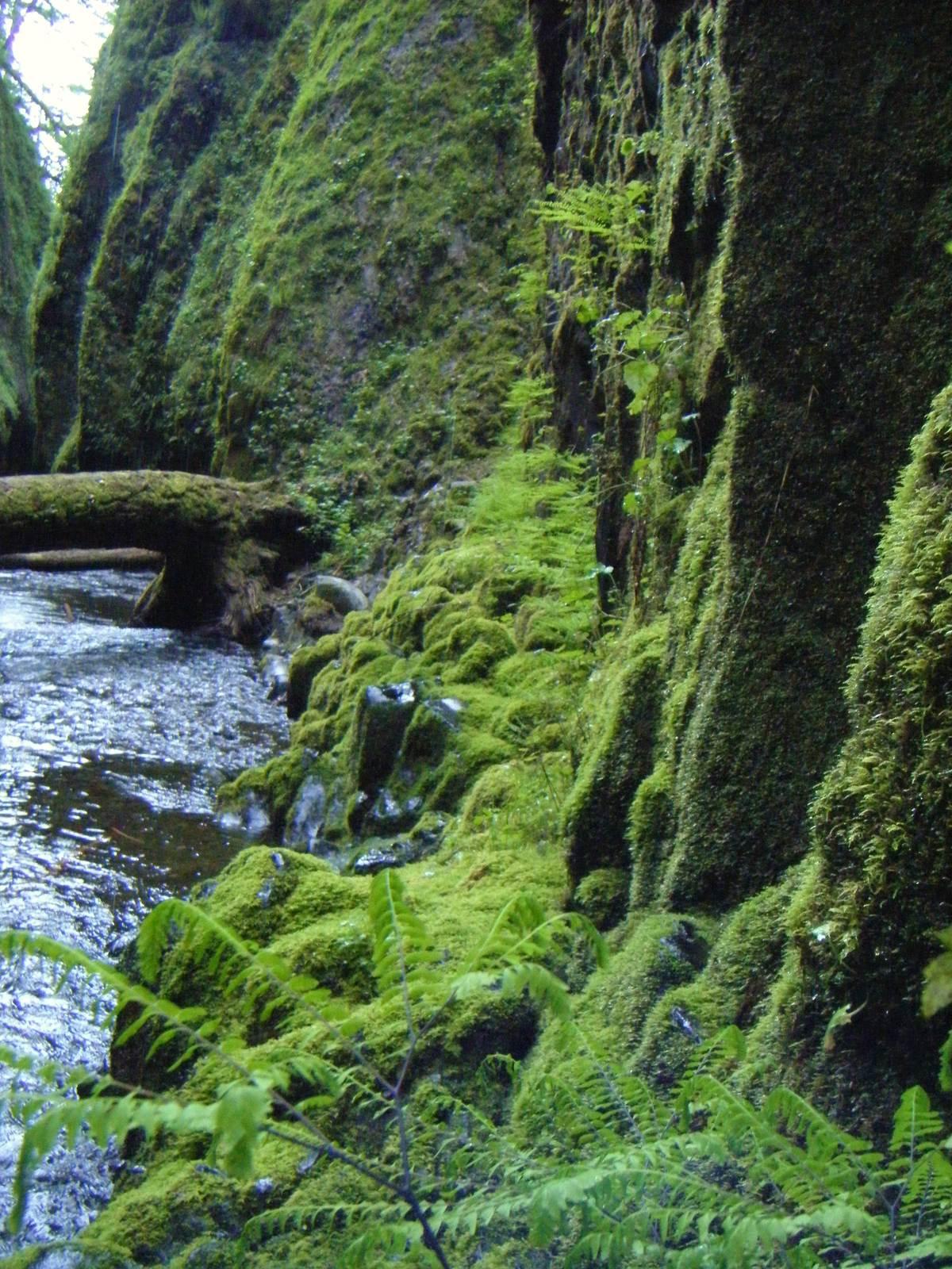 oneonta6 Oneonta Gorge Hike, Oregon