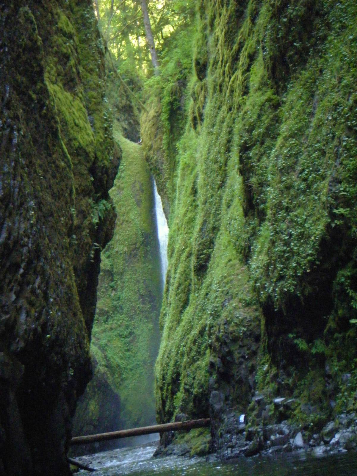 oneonta7 Oneonta Gorge Hike, Oregon