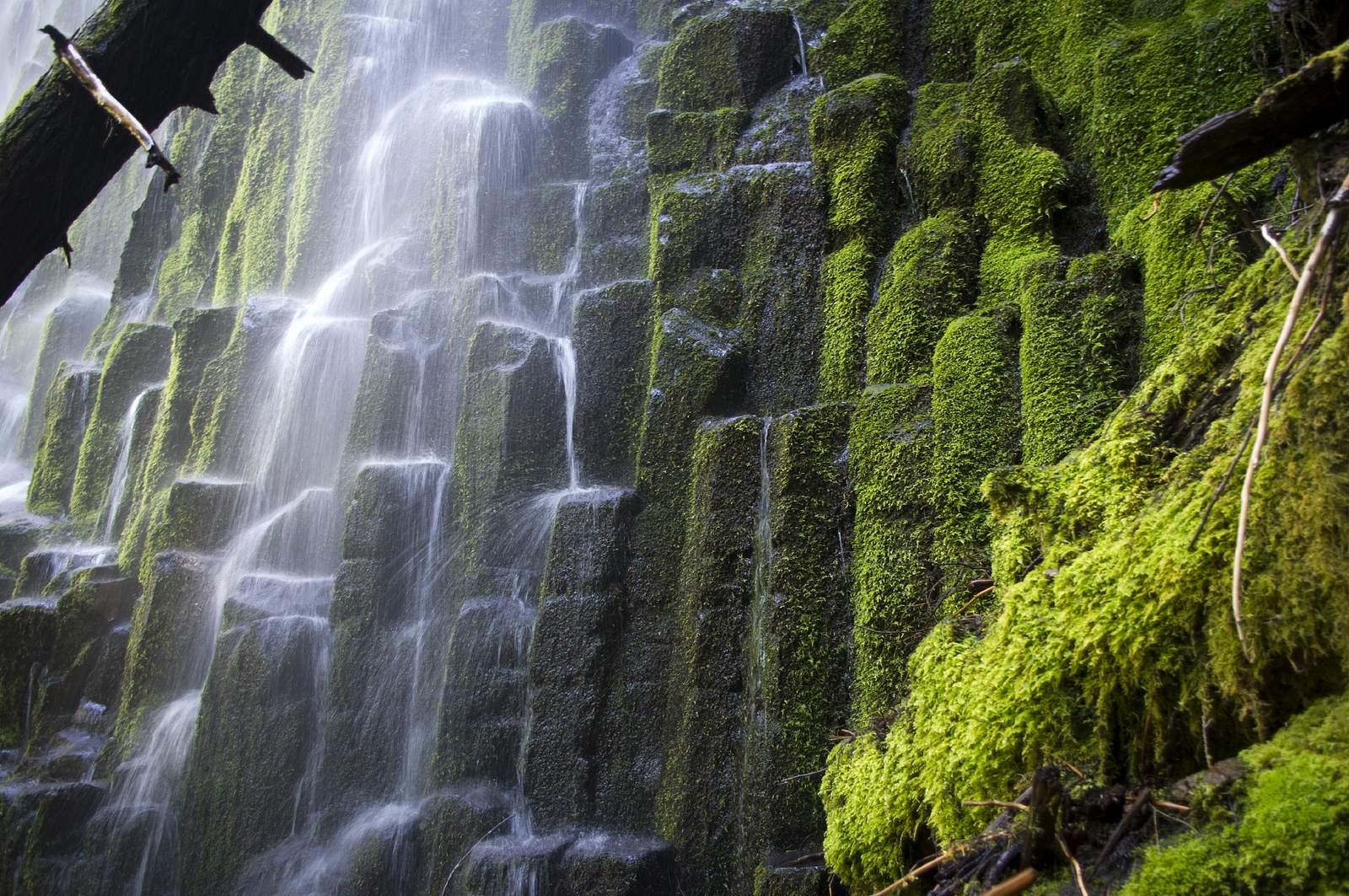 proxy falls Proxy Falls   Oregon Cascades